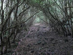 aokigahara-forest-108
