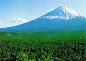 aokigahara_fuji_view1