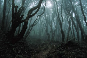 Japans-Suicide-Forest-Spirits-Of-Death-In-A-Sea-Of-Trees